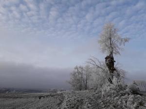 Verschneite Winterlandschaft bei Erbach/Württemberg © Susanne Wosnitzka