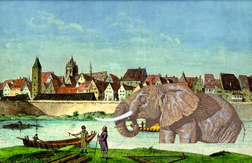 Nabadender Elefant in der Donau in Ulm © Susanne Wosnitzka